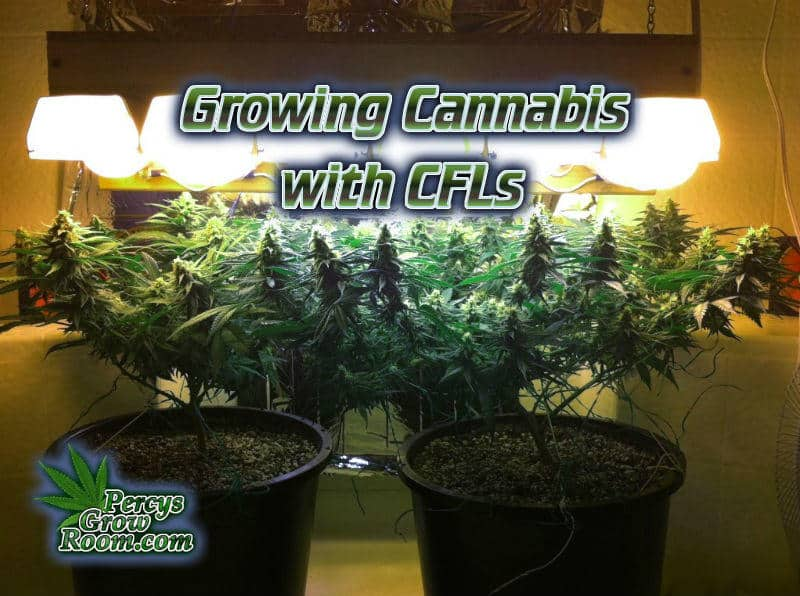 Stupendous Growing Cannabis With Cfls Percys Grow Room Download Free Architecture Designs Embacsunscenecom