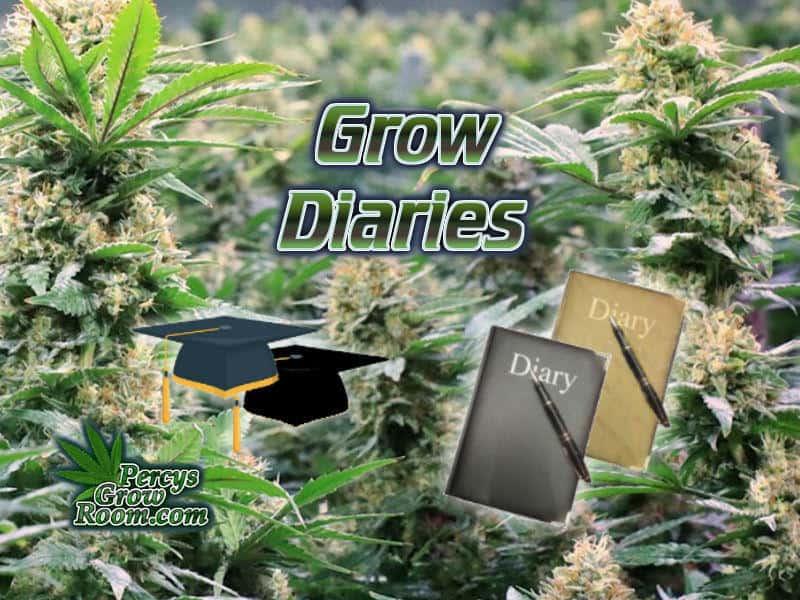 Cannabis Grow Diaries - Percys Grow Room, A Cannabis Growers