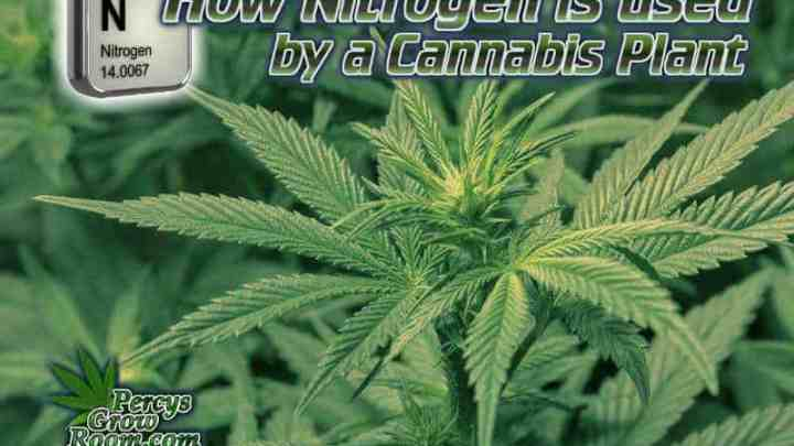 how nitrogen is used by a cannabis plant, how to fix nitrogen deficiency in a cannabis plant, nitrogen toxicity, nitrogen excess