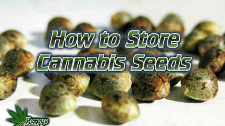 how to store cannabis seeds, beginners guide to growing weed, how to grow weed for personal use, cannabis plant deficiency, how to germinate cannabis seeds, where to buy cannabis seeds, best weed growers website, Cannabis Growers forum, weed growers forum, How to grow legal cannabis, a step by step guide to growing weed, cannabis growing guide, tips for marijuana growers, growing cannabis plants for the first time, marijuana growers forum, marijuana growing tips, cannabis plant problems, cannabis plant help, marijuana growing expert advice