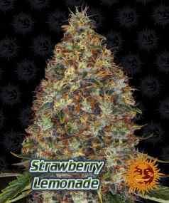 New Strains from Barneys Farm, Strawberry Lemonade