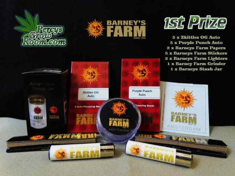 Barneys Farm Heads or Tails Comp