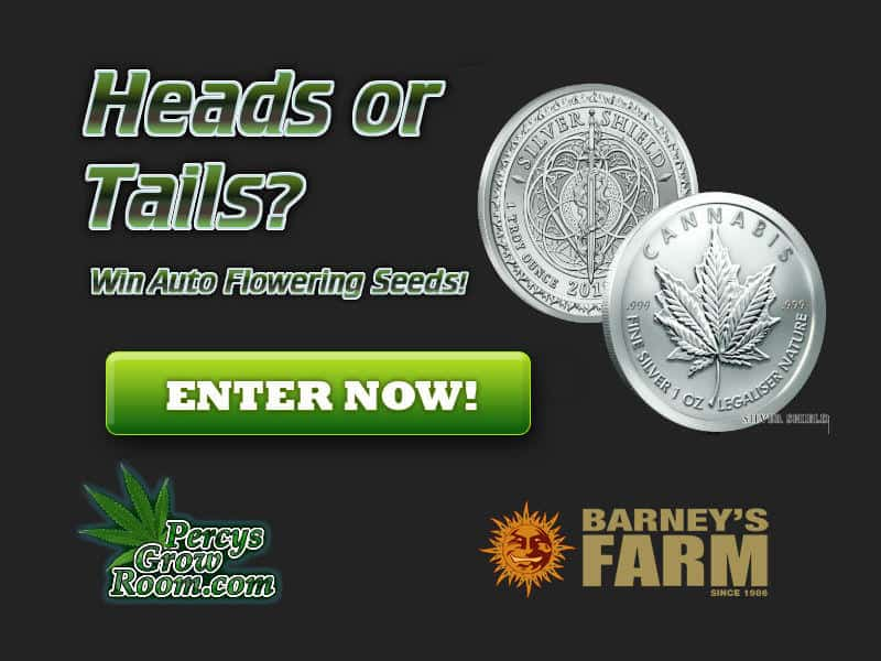 heads or tails comp, barneys farm, beginners guide to growing weed, how to grow weed for personal use, cannabis plant deficiency, how to germinate cannabis seeds, where to buy cannabis seeds, best weed growers website, Cannabis Growers forum, weed growers forum, How to grow legal cannabis, a step by step guide to growing weed, cannabis growing guide, tips for marijuana growers, growing cannabis plants for the first time, marijuana growers forum, marijuana growing tips, cannabis plant problems, cannabis plant help, marijuana growing expert advice