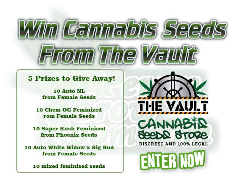cannabis seeds, the vault seedbank, beginners guide to growing weed, how to grow weed for personal use, cannabis plant deficiency, how to germinate cannabis seeds, where to buy cannabis seeds, best weed growers website, Cannabis Growers forum, weed growers forum, How to grow legal cannabis, a step by step guide to growing weed, cannabis growing guide, tips for marijuana growers, growing cannabis plants for the first time, marijuana growers forum, marijuana growing tips, cannabis plant problems, cannabis plant help, marijuana growing expert advice