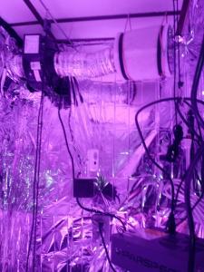 inside veg tent (7)