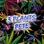 3plantsPete