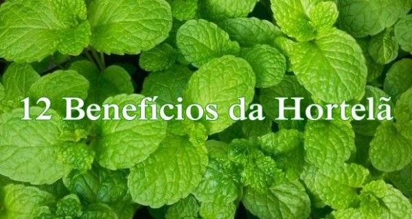 Benefícios da Hortelã e Suas Propriedades