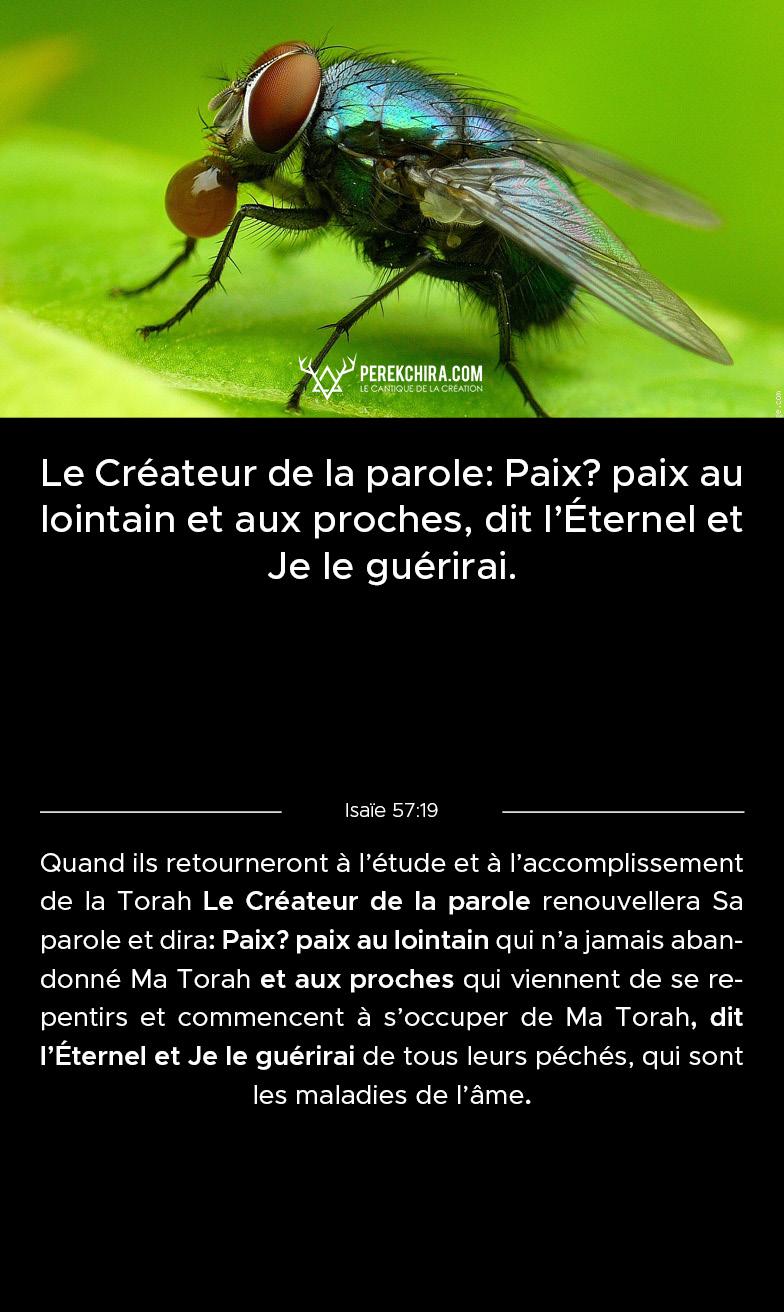 Perek chira commenté en français