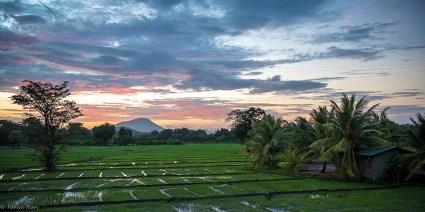 Paddy fields, Kalundewa