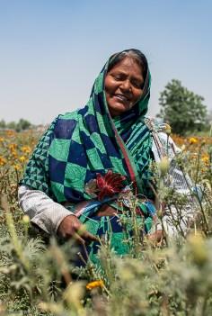Marigold picker