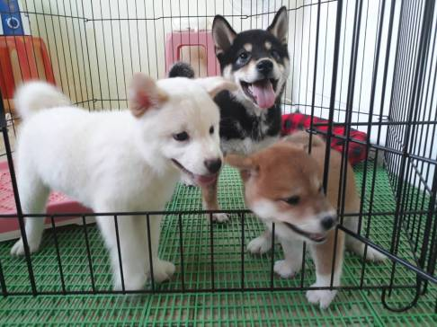 perfect-puppy.com