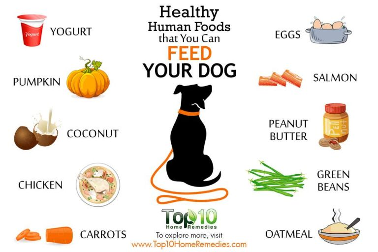 Healthy human foods that you can feed your dogs