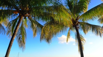 palm-trees-630089_960_720