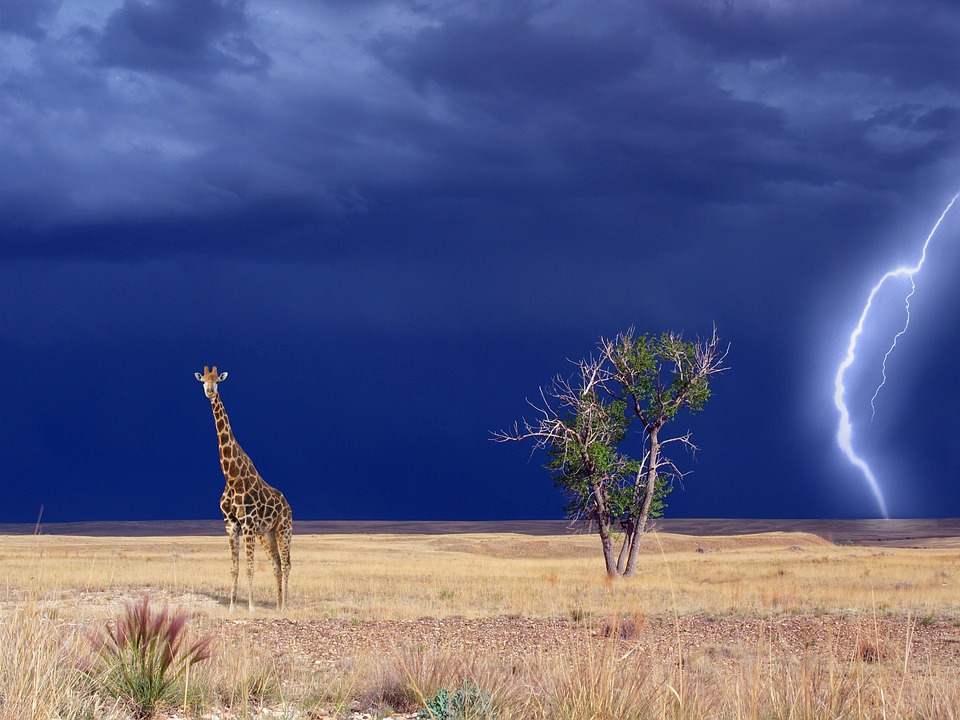 giraffe-1742236_960_720