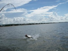 Indian Pass Tarpon going airborne!