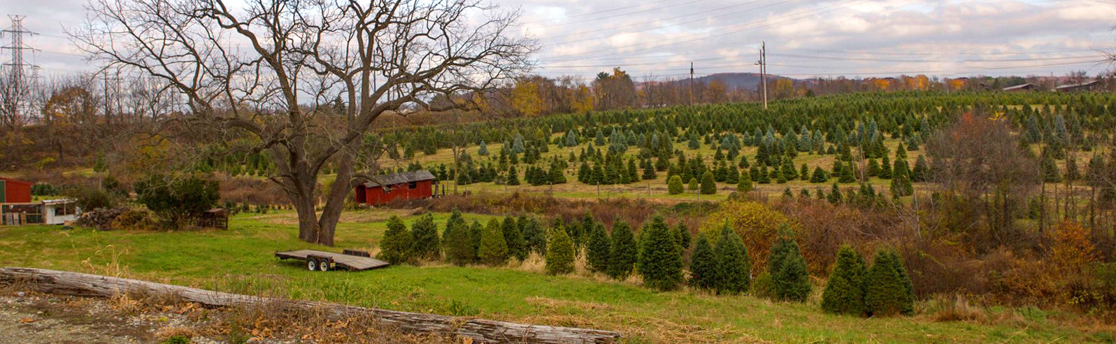 Christmas Tree Farm in Central New Jersey