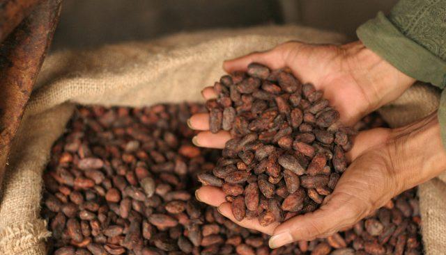 Una Guía Para Principiantes: Cómo Tostar Cacao de Calidad ...