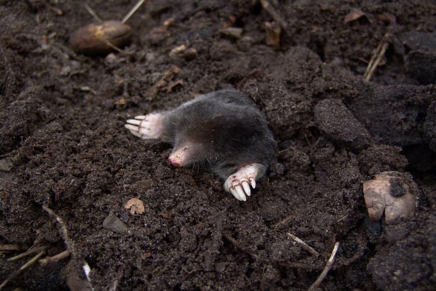 get rid of dirt