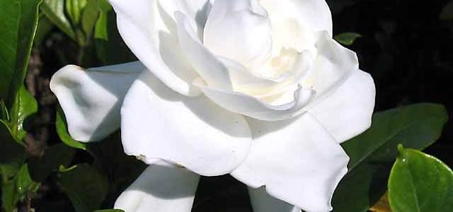 Cand traiesti doar in lumea ta …. exista remedii florale simple