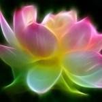 oneness-lotus