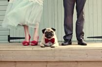 Pug.Redbowtie
