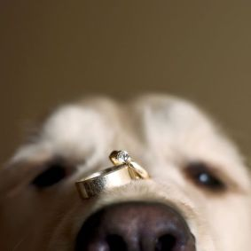 Puppy_Rings