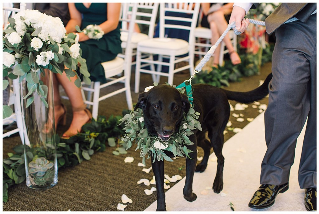 Elena + Travis wanted their dog, Aspen, to be a part of their special day. Here he is being walked down the Aisle by Elena's brother with his greenery collar!