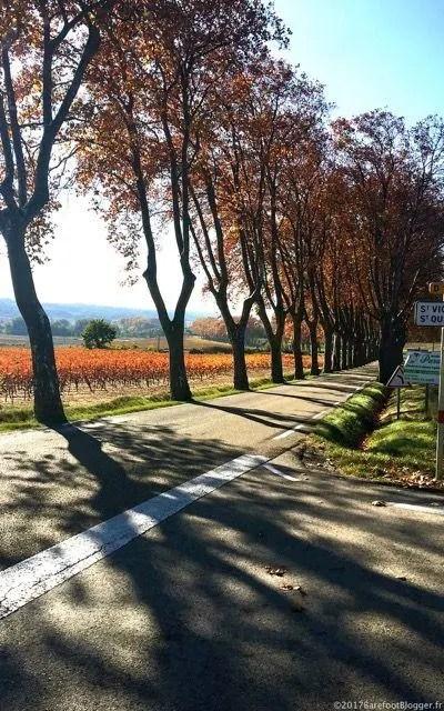 Provence Autumn Provencal Lifestyle Retirement Adventure Deborah Bine Barefoot Blogger