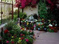 Patio Gardening 101: A Beginners Guide To Patio Gardens