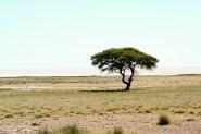 TerraVista, Spezialist für Namibiareisen: Steppe in Namibia