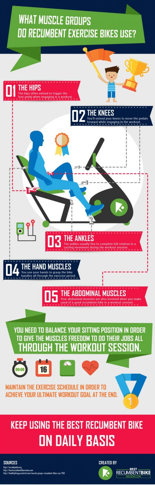 Infographic - What Muscle Groups Do Recumbent Exercise Bikes Use
