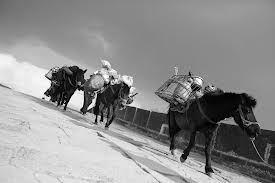 Cartier L'Heure Fougueuse - tea road with horses