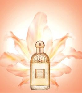 starter perfumes 2