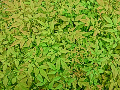 eo03 biehl parfumkunstwerke leaves_green WikiCommons