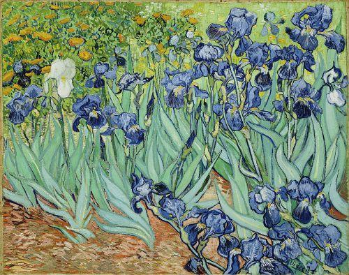 Iris Bleu & Iris Blanc L`Occitane Van Gogh Irises2 WikiMedia