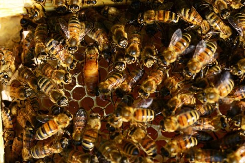 Cologne Pour Le Soir Maison Francis Kurkdjian bees honey Pixabay