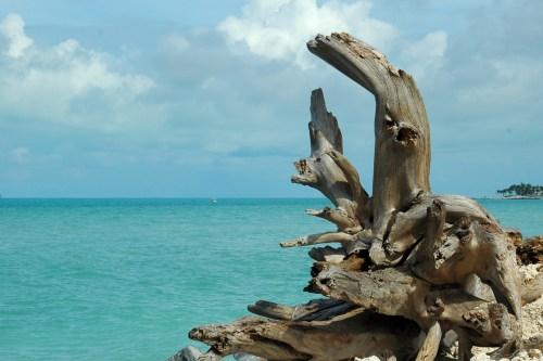 driftwood-on-the-beach- Vanille Marine M. Micallef