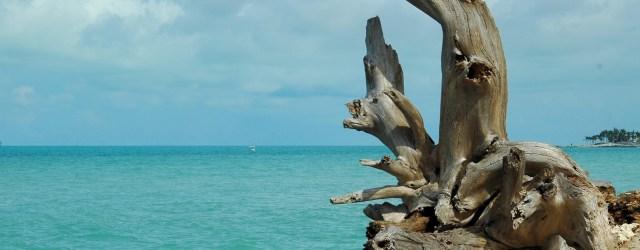 driftwood-on-the-beach-1420308239oth