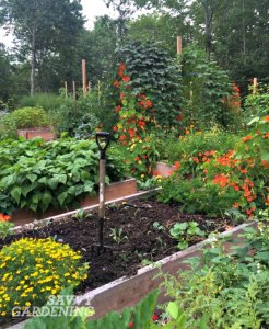 raised-beds-SG