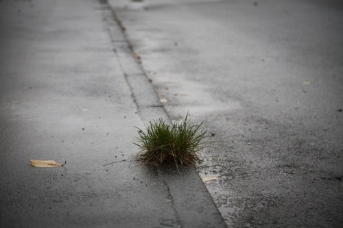 Indigo Baruti autumn_mood_dreary_weather_dank_rain_puddles_wet_autumn_raining PXHere