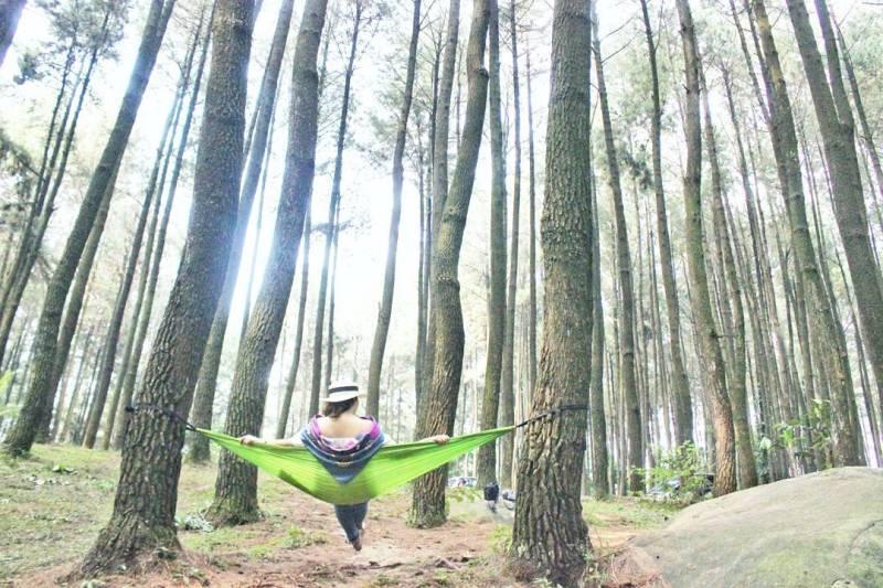 Tempat wisata hutan pinus gunung pancar ini cocok untuk anda yang suka dengan alam via @egiatarigan