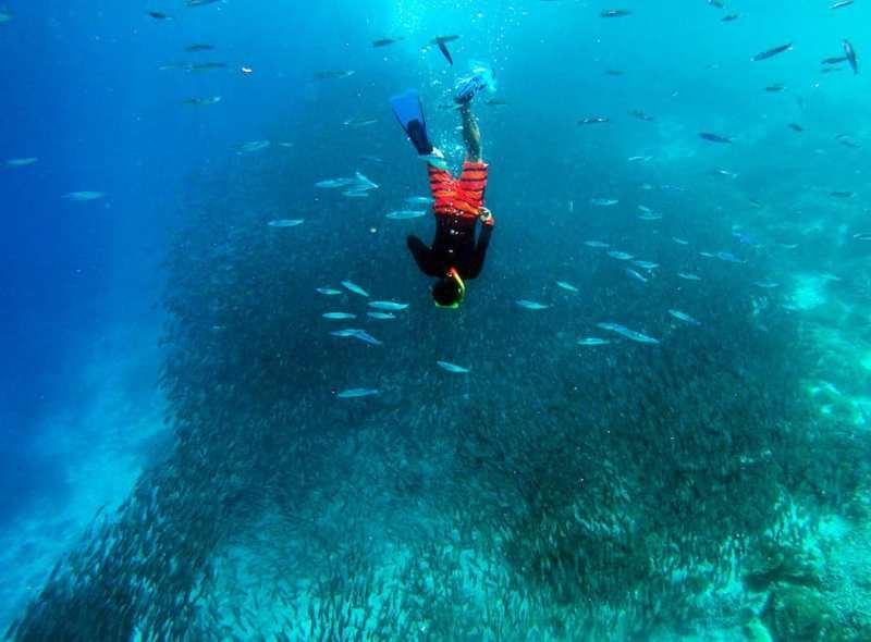 Keindahan bawah laut Raja Ampat tak terkalahkan via @sumurdiladang