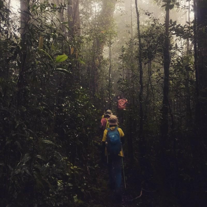 Perjalanan mencapai kawasan taman nasional Bukit Baka Bukit Raya National Park ini saja sudah terbilang amat menantang! @sannyshalieana