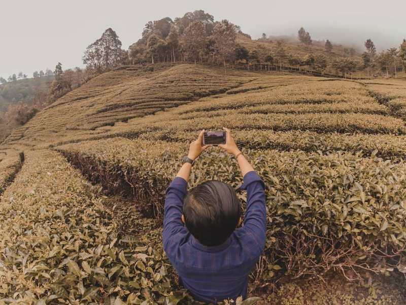 Daftar Tempat Wisata Di Blitar Jawa Timur Lengkap, Perkebunan Teh Sirah Kencong Blitar