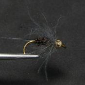 Peacock CDC Nymfi