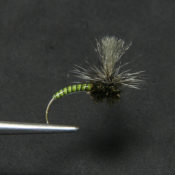 Vihreä Quill Klinkhammer