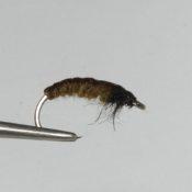 Ruskea Väkäsetön Larva