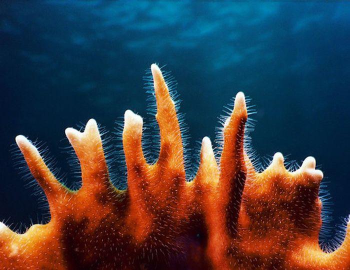 Perierga.gr - Πανέμορφα κοράλια!