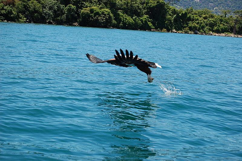 Perierga.gr - Πανέμορφος αετός