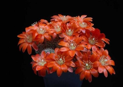 Perierga.gr - Λουλούδια σε κάκτους